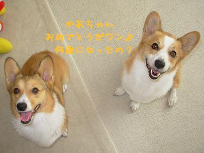 3.19紋&杏