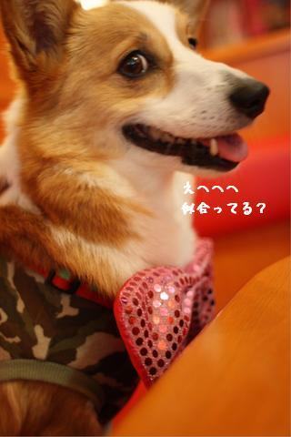 3.22ワンダフル蝶ネクタイ紋(ふーこさん)文字
