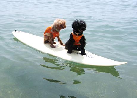 surf9.jpg