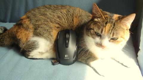 マウスなの