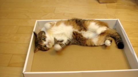 やっぱり箱かしら2