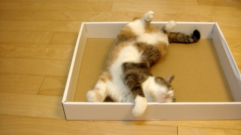 やっぱり箱かしら6