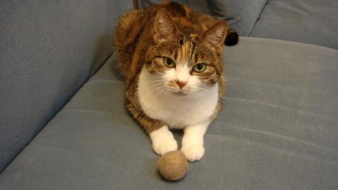 猫毛ボール