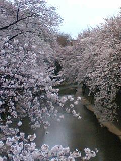 桜327 2