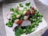 かぶ・かいわれ大根・えんどう豆のサラダ