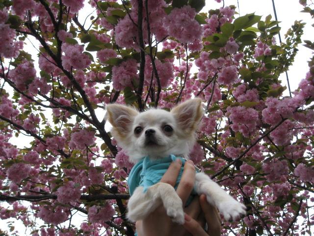 dogly034.jpg