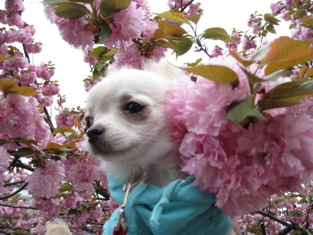 dogly036.jpg