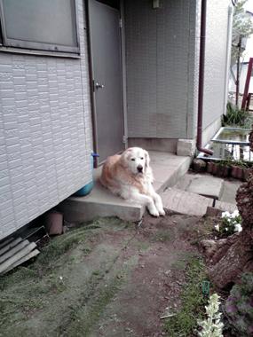 20080412 jhonshi