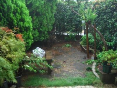 庭が池に・・・