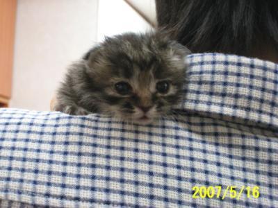 子猫 072