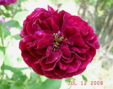 20080712_10.jpg