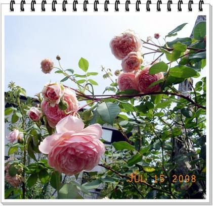 20080715_51.jpg