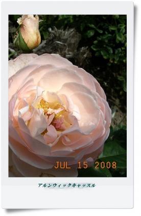 20080715_91.jpg