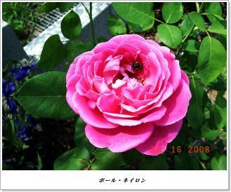 20080716_13.jpg