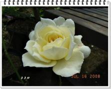 20080716_7.jpg