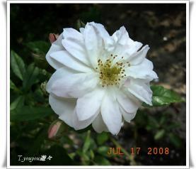 20080717_15.jpg