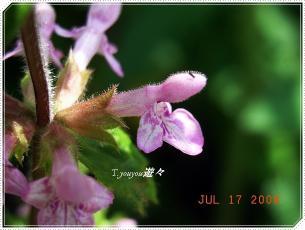 20080717_4.jpg
