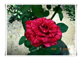 RIMG0151.jpg