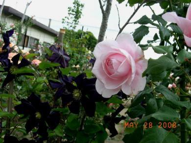 RIMG4607.jpg