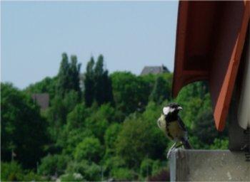 BIRD_350.jpg