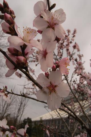 4.02.2008.名花 001