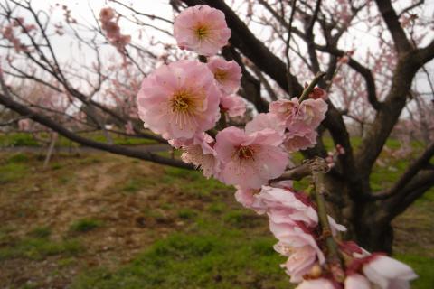4.02.2008.名花 020