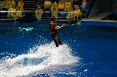 イルカに乗った中年