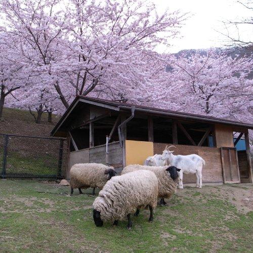ひつじとヤギの小屋