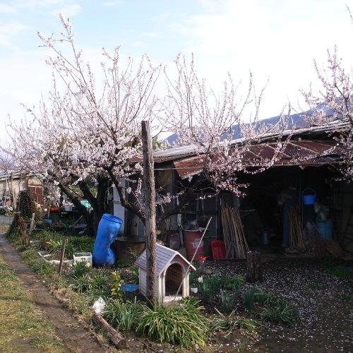花咲く小屋