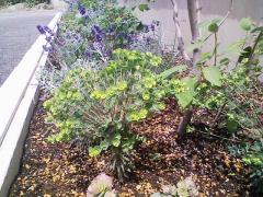 初年度花壇1