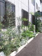 Garden 08/05/03