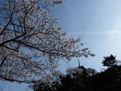 三重の搭と桜