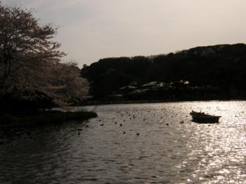 大池・夕日が沈みはじめました。。