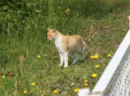 公園にいたネコ