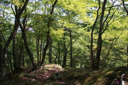 静かな登山道