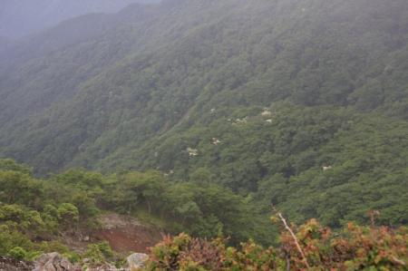 谷間に咲くヤマボウシ