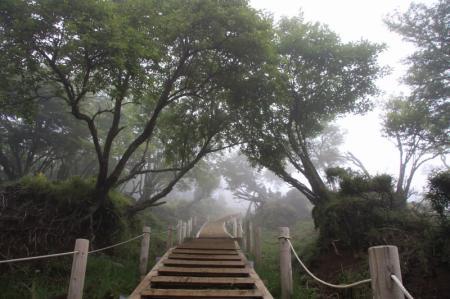 この階段を上がると頂上デス