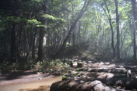 大菩薩嶺への道