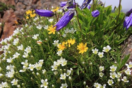 山頂近くに咲いていた花たち