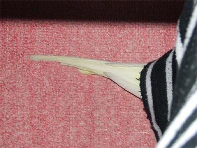 piro20080317-19.jpg