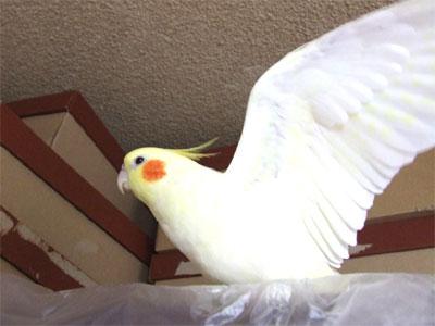 piro20080326-1.jpg