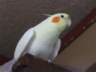 piro20080329-5.jpg