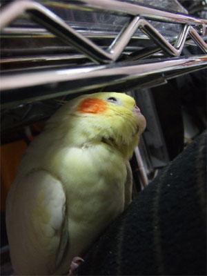 piro20080330-3.jpg