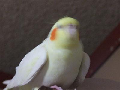 piro20080424-7.jpg