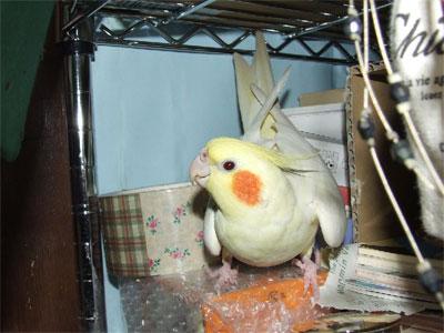 piro20080425-3.jpg