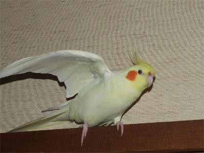 piro20080425-4.jpg