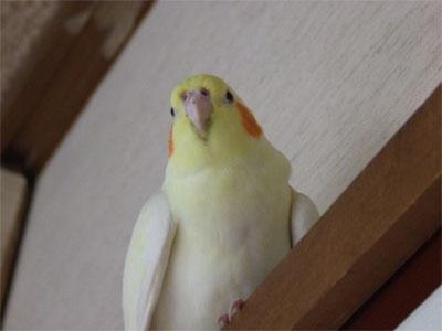 piro20080428-7.jpg