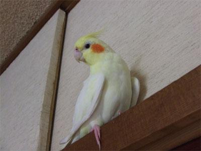 piro20080525-26.jpg