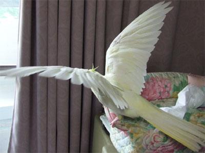 piro20080525-28.jpg