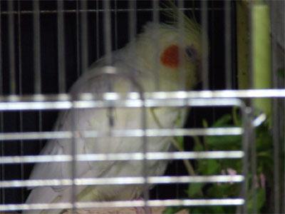 piro20080530-5.jpg